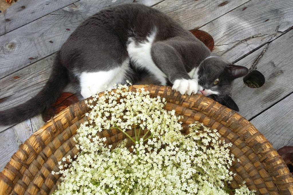 Homemade Elderflower Cordial | Anna International